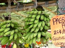 Bananer – Byg en barriere mod mavesyre og pepsin!